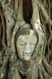 Kierowniczy Buddha Obraz Royalty Free