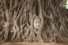 kierowniczy Buddha drzewo Fotografia Royalty Free