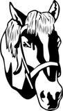 kierowniczy koń Fotografia Stock
