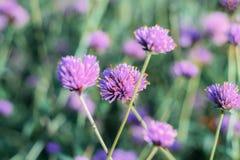 Kierowniczy kwiat w zimie obrazy stock