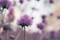 Kierowniczy kwiat w zimie fotografia stock