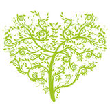 kierowy drzewo Zdjęcie Stock