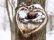 Kierowy kształt na drzewie Serce na śnieżnym drzewie fotografia stock
