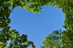 Kierowy kształt przez zieleni opuszcza przeciw niebieskiemu niebu Romantyczny lub eco miłości symbolu konceptualny pomysł dla abs zdjęcia stock
