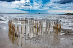 Kierowy kształtny bambus który jest w morzu przy uderzeniem Poo, Samut Prakan Zdjęcia Royalty Free