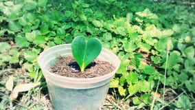 Kierowy liścia zdjęcie Zdjęcia Royalty Free