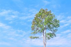 Kies groene boom op levendige blauwe hemel met wolken op achtergrond in de zomerdag uit royalty-vrije stock foto's