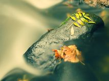 Kies im Wasser von Gebirgsfluss bedeckt durch bunte Espen- und Buchenblätter Neues Grün verlässt auf Niederlassungen Überwasser m Stockbild