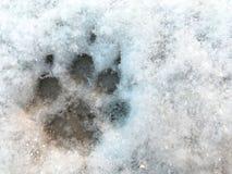 Kies pootdruk in sneeuw uit Stock Fotografie