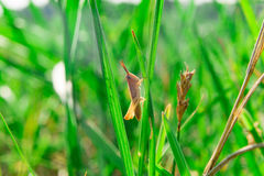 Kies weinig bruine grasshooperzitting in gras uit Royalty-vrije Stock Foto