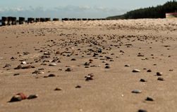 Kiesel auf dem Strand 1 stockbild