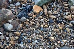 Kiesel durch den Strand, der unten schaut Stockfotografie