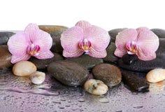 Kiesel und Orchideen Stockfotos
