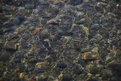 Kiesel unter Wasser Stockfotografie