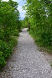 Kieseliger Waldweg Lizenzfreies Stockbild