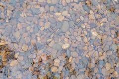Kieselstein im Wasser Lizenzfreies Stockfoto