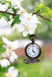 Kieszeniowego zegarka obwieszenie od gałąź jabłoń w pełnym kwiacie obraz royalty free