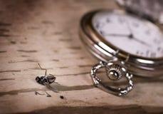 kieszeniowy komarnica zegarek zdjęcie stock