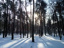 Kiev, bosque del invierno Foto de archivo libre de regalías