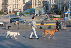 Kiev, de Oekraïne - September 11, 2013: Vrouw met twee honden het lopen Stock Foto