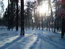 Kiev, invierno Imagenes de archivo