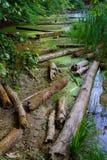 kiev jezioro bagienny zalewający drzewa Obrazy Royalty Free