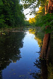 kiev jezioro bagienny zalewający drzewa Obraz Royalty Free