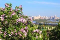 Kiev and lilac in spring Stock Image