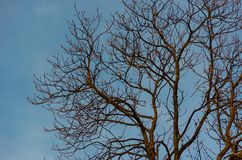 Bird on a bare tree stock photography