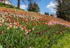KIEV, parque del paisaje de la demostración de la Ucrania-flor en Kiev Foto de archivo