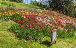 KIEV, parque del paisaje de la demostración de la Ucrania-flor en Kiev Foto de archivo libre de regalías