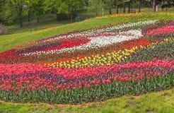 KIEV, parque del paisaje de la demostración de la Ucrania-flor en Kiev Fotos de archivo