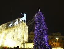 kiev ucrânia Árvore de Natal Imagens de Stock
