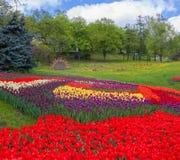 KIEV Ukraina-blomma showlandskap parkerar i Kiev Royaltyfria Bilder