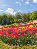KIEV Ukraina-blomma showlandskap parkerar i Kiev Arkivfoton