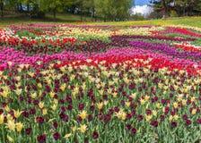 KIEV Ukraina-blomma showlandskap parkerar i Kiev Fotografering för Bildbyråer
