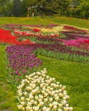 KIEV Ukraina-blomma showlandskap parkerar i Kiev Arkivbild