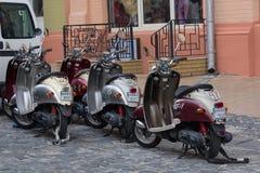 Kiev Ukraina - Juli 02, 2017: Många motoriska sparkcyklar som parkeras i gatan Fotografering för Bildbyråer