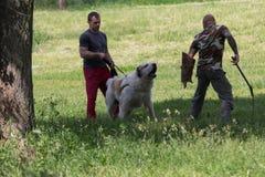 Kiev Ukraina - Juni 05, 2016: Utbildning av en tjänste- hund i Royaltyfri Fotografi