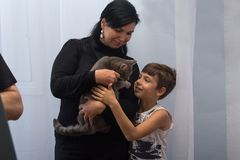 Kiev, Ukraine - 27 août 2016 : La mère et le fils sélectionnent un chat dans un animal familier Images stock