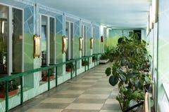 Kiev, Ukraine - 3 février 2019 : Zoo de Kiev Exposition d'hiver des primats photos stock