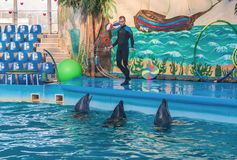 KIEV, UKRAINE:  Instructor  performs with marine mammals — dol Royalty Free Stock Image