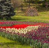 KIEV, UKRAINE-Flower Show Landscape Park in Kiev Stock Images