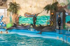 KIEV, UKRAINE:  Instructors performs with marine mammals — dol Stock Photos