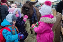 Kiev, Ukraine - January 13, 2018: Childrens feed animals in the zoo. Kiev, Ukraine - January 13, 2018: Childrens feed animals in the contact zoo royalty free stock photos