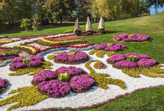 KIEV, UKRAINE - OCTOBER11: Chrysanthemumsr Show Landscape Park i Stock Photo