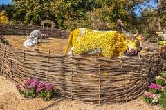 KIEV, UKRAINE - OCTOBER11: Chrysanthemumsr Show Landscape Park i Stock Photos