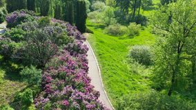Kiev Ukraine. Spring blooming lilac in Hryshko National Botanical Garden. view to Vydubychi Monastery and river Dnipro. Aerial Video footage stock video footage