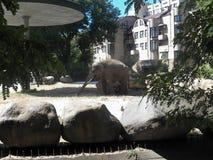 Elephant in the Kiev zoo. Kiev zoo one of the biggest in Ukraine stock photo