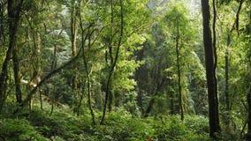Kiew Mae Pan Rain skog Royaltyfria Bilder